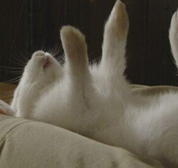"""催眠大师教你如何""""催眠""""小动物?"""